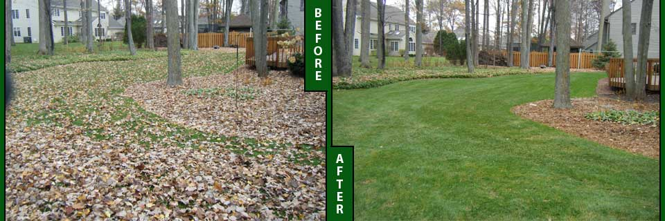Fall Backyard Cleanup : fall leaf removal clean up services westfield nj leaf removal and