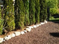 landscape Hedge installation