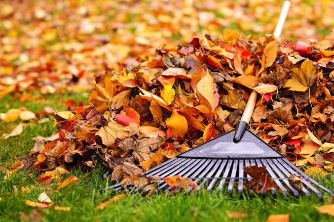 Westfield, New Jersey - Fall-Cleanup